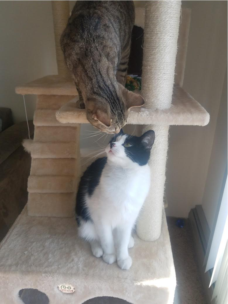 two cats sniffing each other while sitting on a cat tree